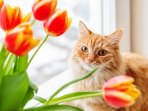 Pet-Friendly Flowers (And Flowers to Avoid)