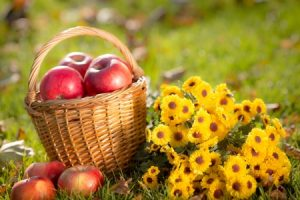 7 Fall Flowers to Put in Your Home