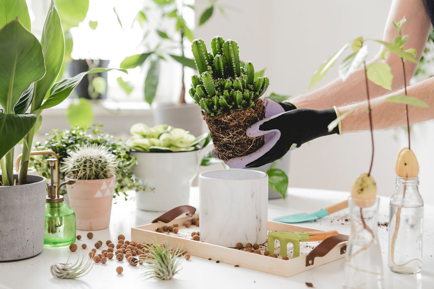 person handling indoor potted plants